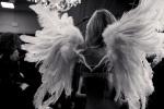 wingsVictoriasSecretbydaniellarech